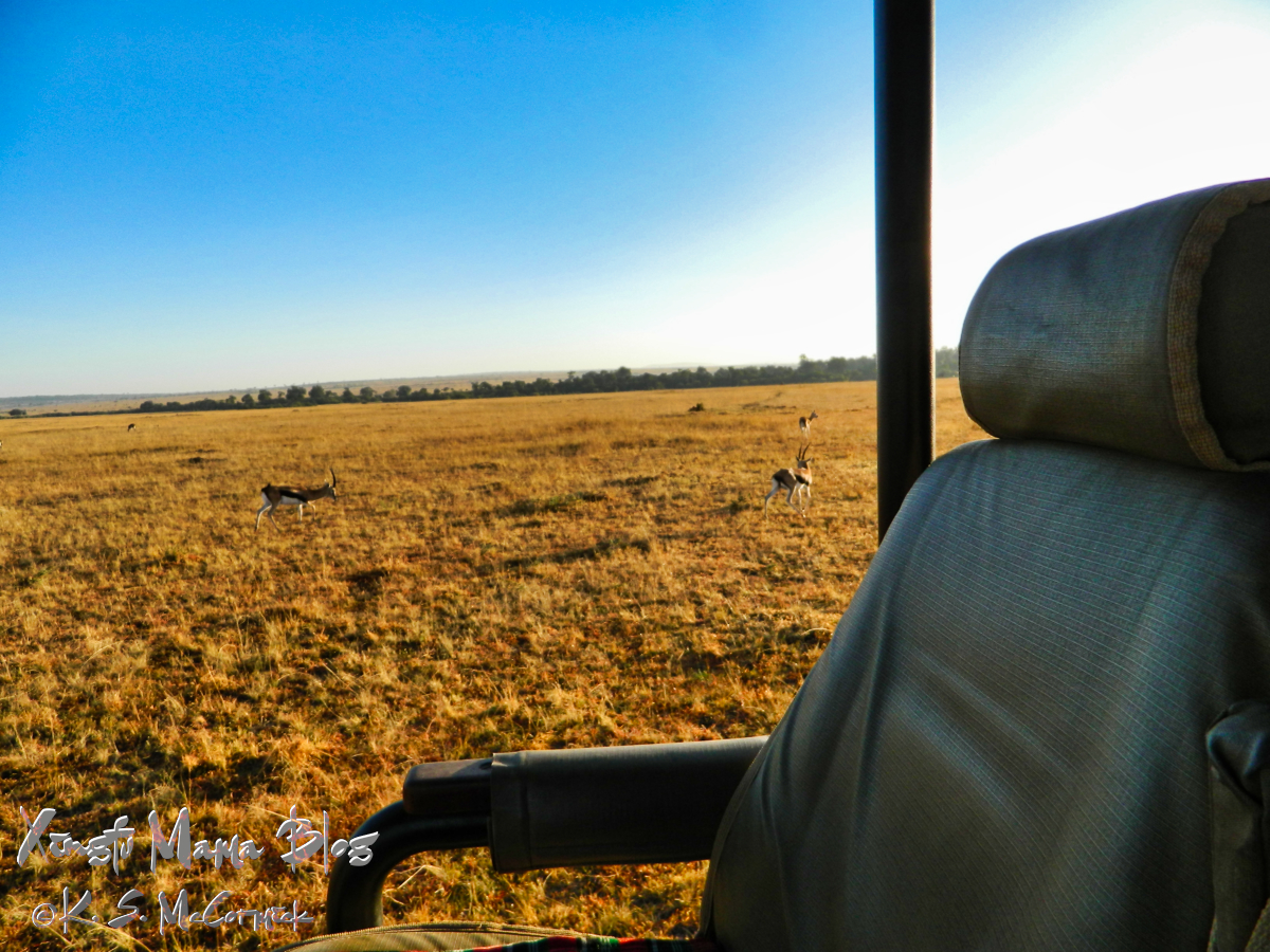 Seat in the safari vehicle, view beyond of Masai Mara with Thompson's gazelle.