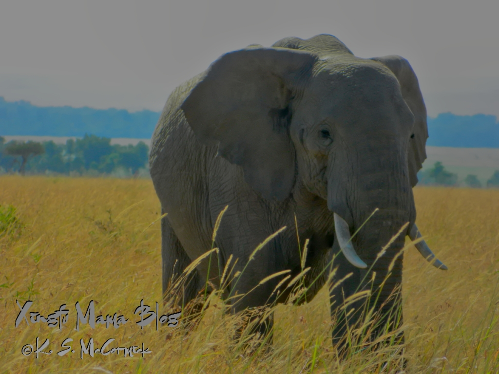 A low pixel count jpg photo of an African elephant image processed using RAW Therapee.