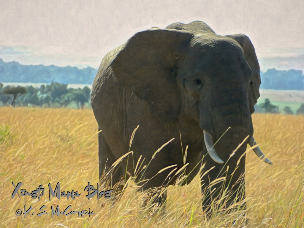 A low pixel count jpg photo of an African elephant image processed using Topaz Studio 2, adding the Safari Afternoon Look.