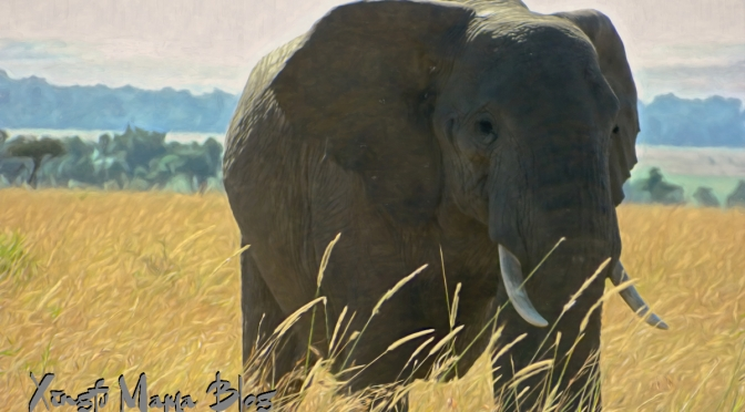 Photo processing adventures with a heffalump