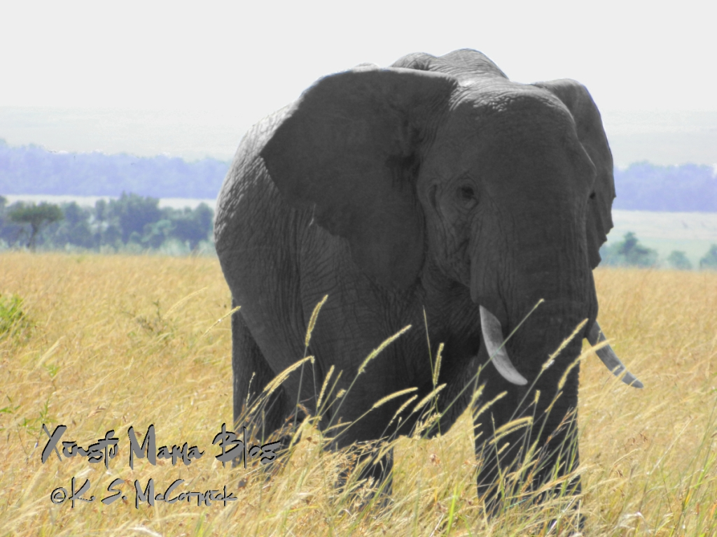 A low pixel count jpg photo of an African elephant image processed using Gnu Image Manipulation Program (GIMP).