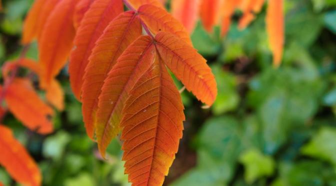 Leaf lines