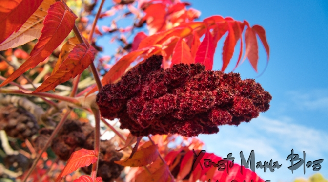 Up close and personal with sumac