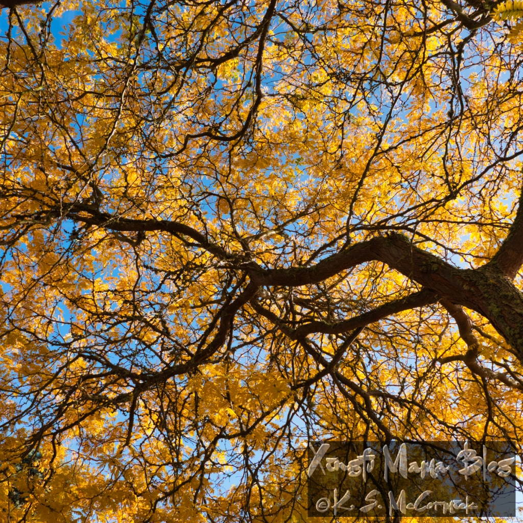 Locust Tree in its fall colors.