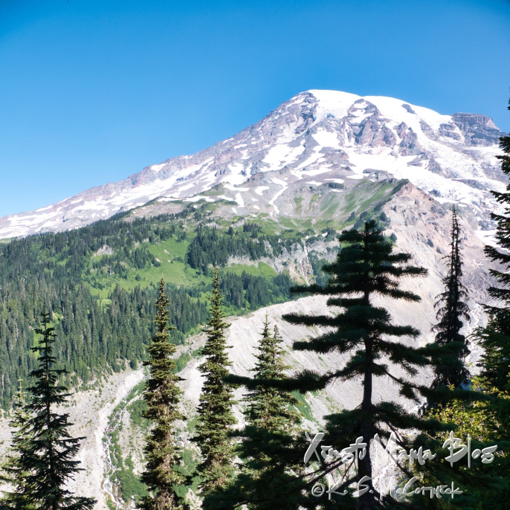 Square image of Mount Rainier from Nisqually Glacier overlook. The irregular tree line is visible on the side of the mountain and a line of tree tops forms the border of the picture.
