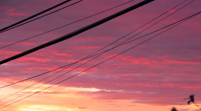Power lines: bain or blessing?