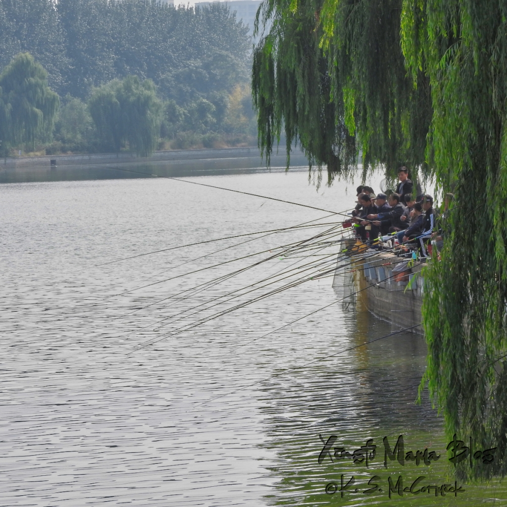 Several people fishing under a weeping willow tree on the banks of the Mihe River in Shouguang, Shandong Province, China.