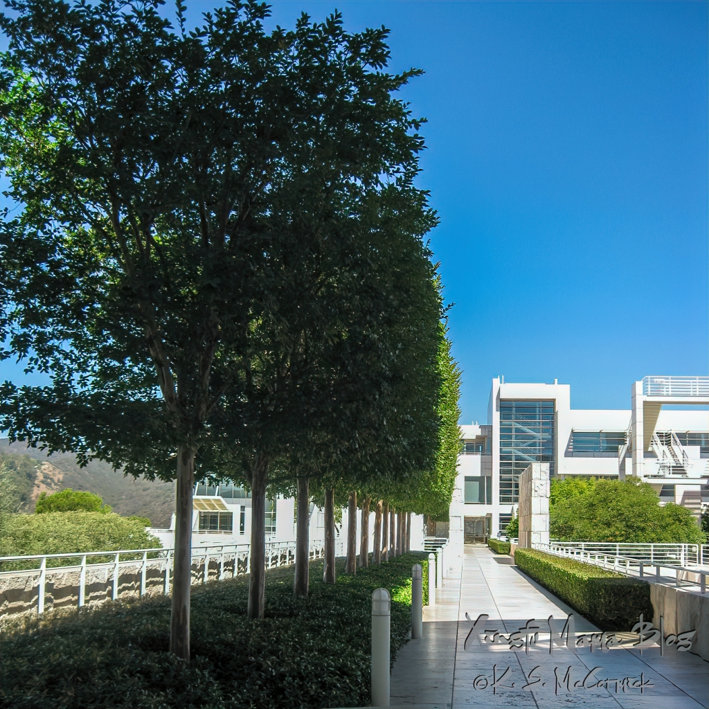 A well groomed and regular line of trees beside a walkway at the Getty Museum in LA.