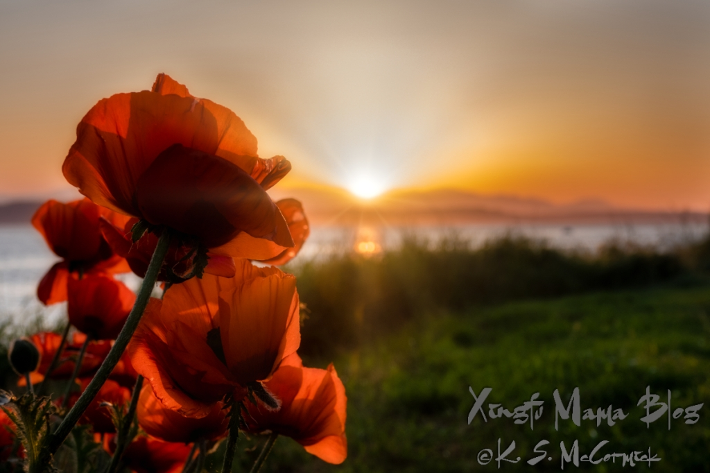 Oriental poppies appear to be watching a summer sunset over Puget Sound.