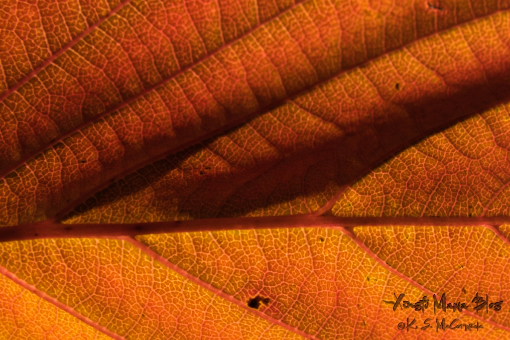 Close-up photo of a fall leaf