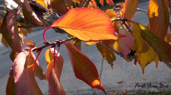 Fall leaf soon to fall