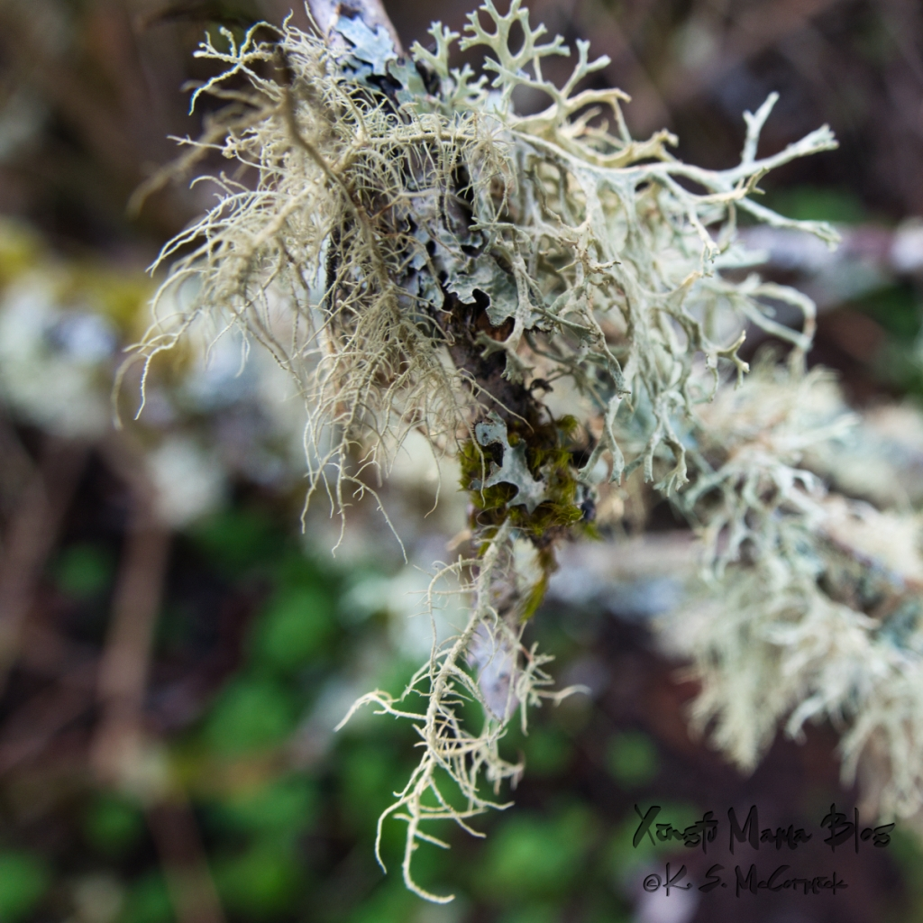 Lichen close-up photo.