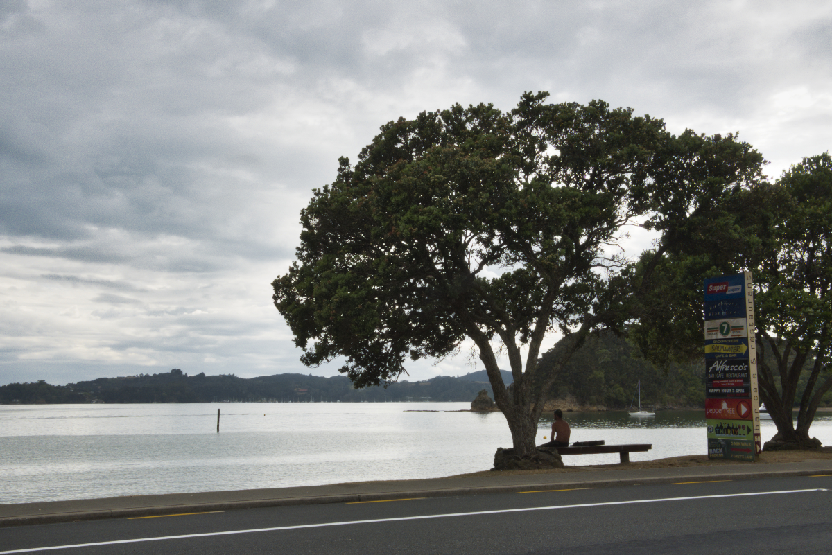 A man sitting on a bench under a pahutakawa tree on the waterfront at Paihia.