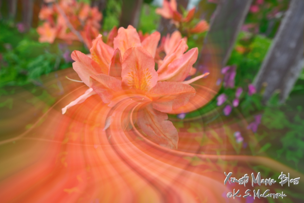 Twirling effect applied to a deciduous azalea.