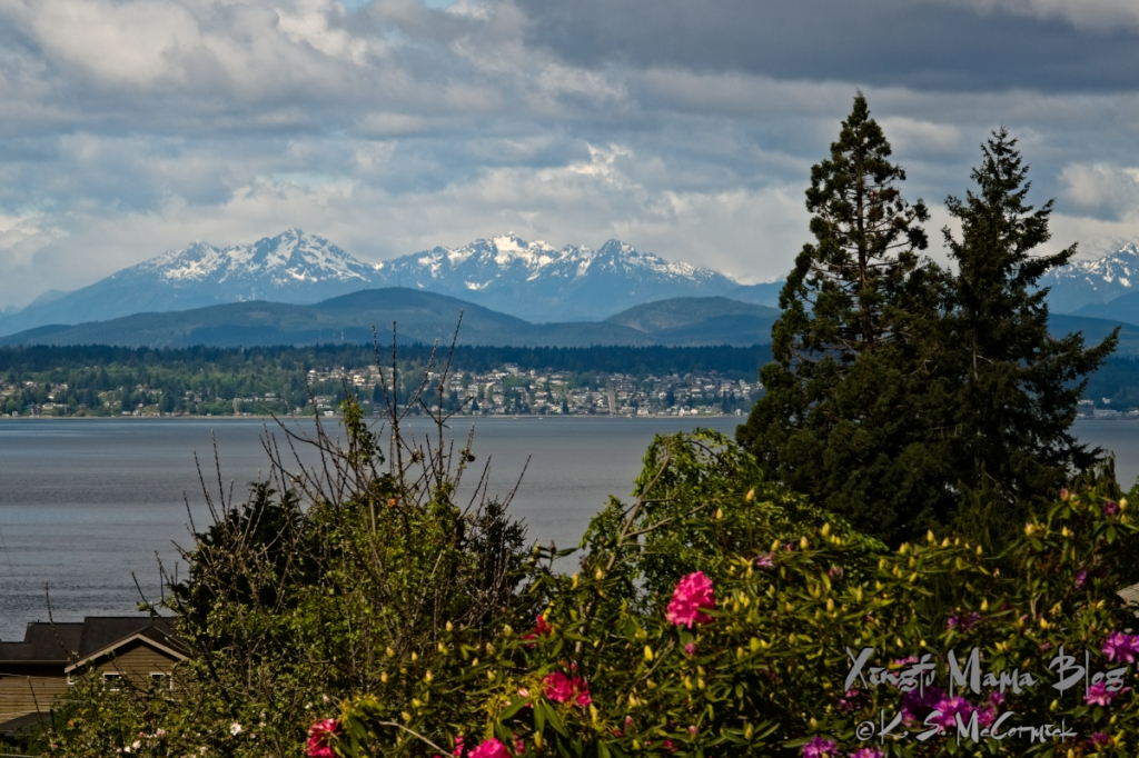 A view across Puget Sound to the Olympic Mountains with blooming rhododendrons in the foreground.