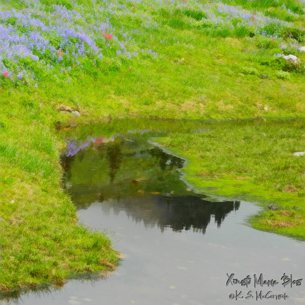 The mountainside meadow at Paradise on Mout Rainier reflected in a pool of water.