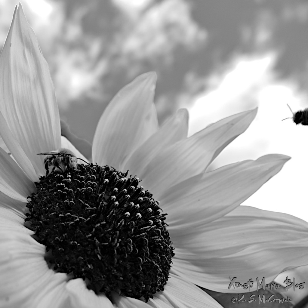 With color removed, a black and white of the image above allows the textures to really shine.