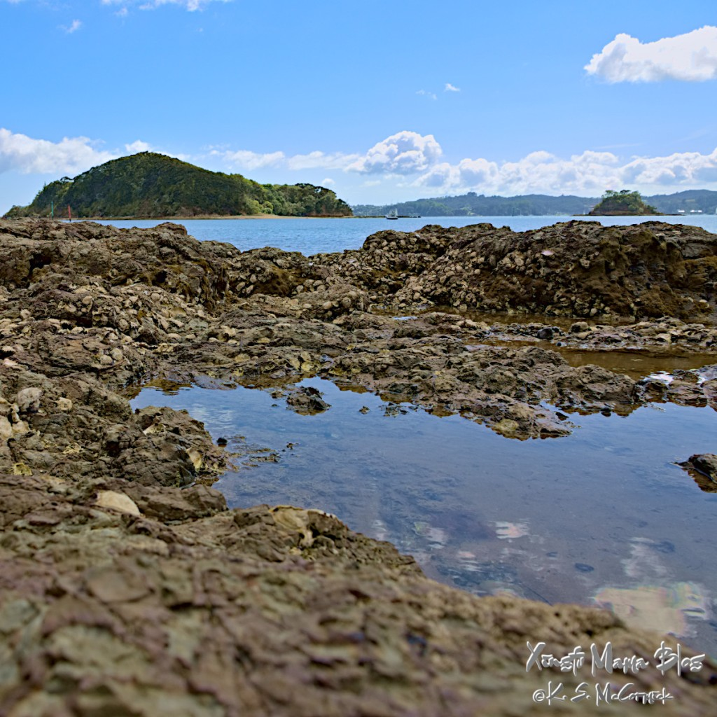 A tide-pool with the Bay of Islands (New Zealand) in the background.