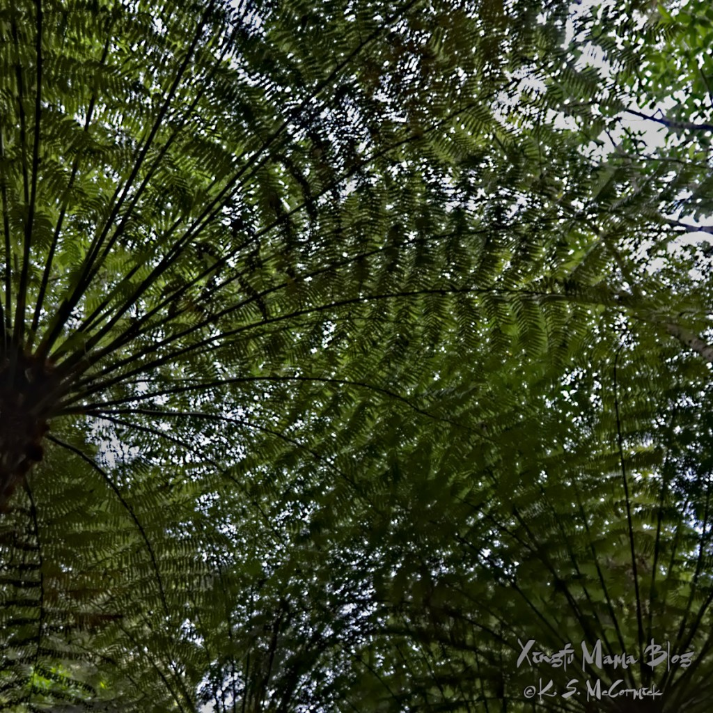 Looking up at the forest canopy formed by fern trees.