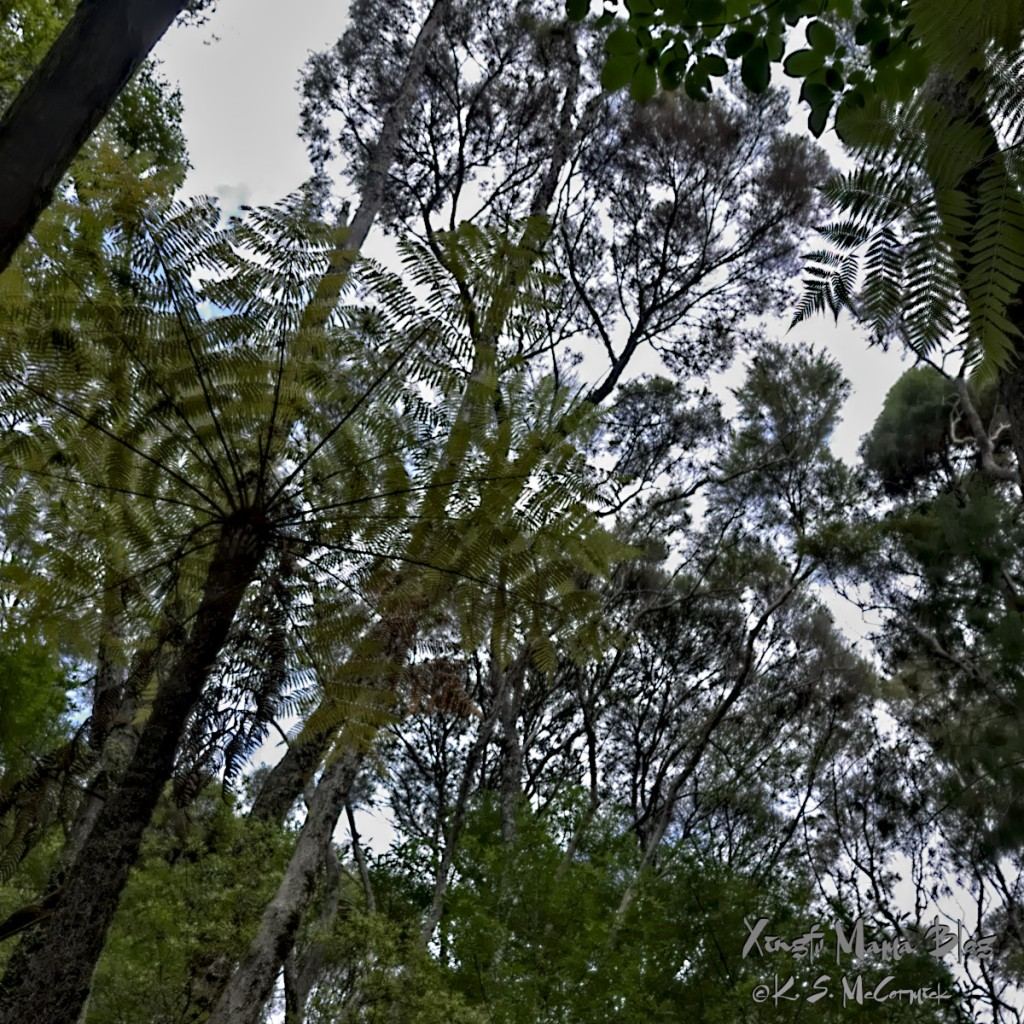 Looking up at the forest canopy formed by fern and kauri trees.