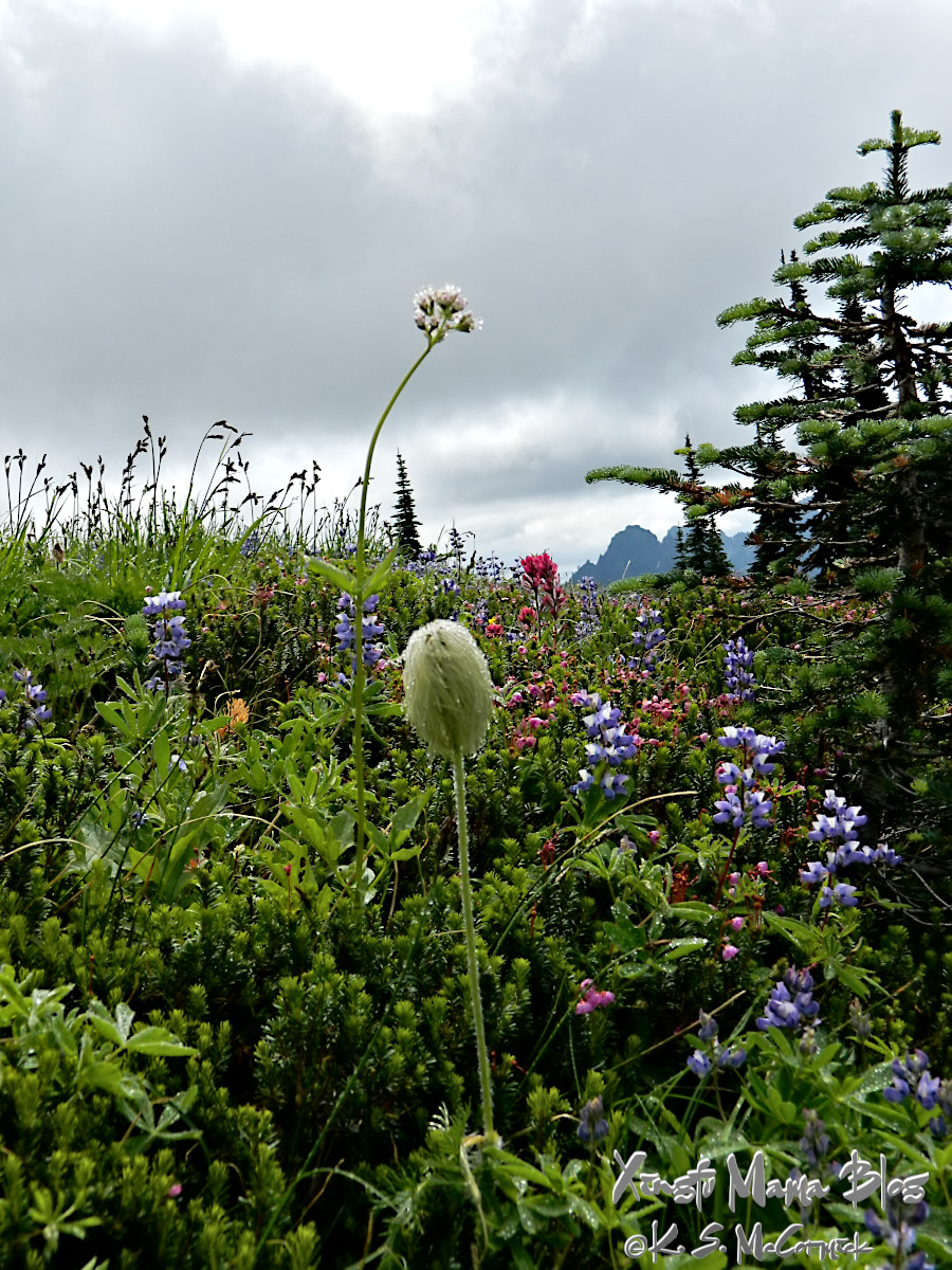 Meadow of blooming flowers near Paradise on Mount Rainier.
