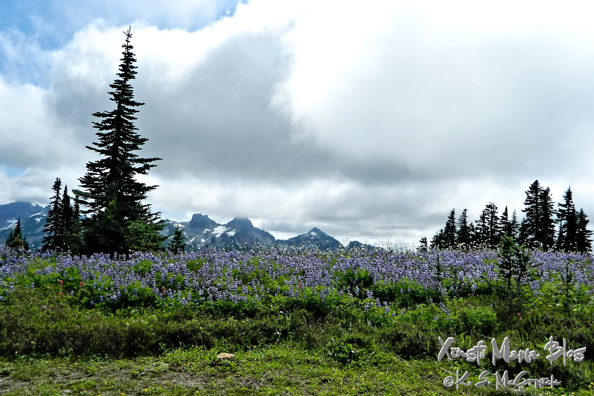 Meadow of lupines with jagged mountains and a cloudy sky.
