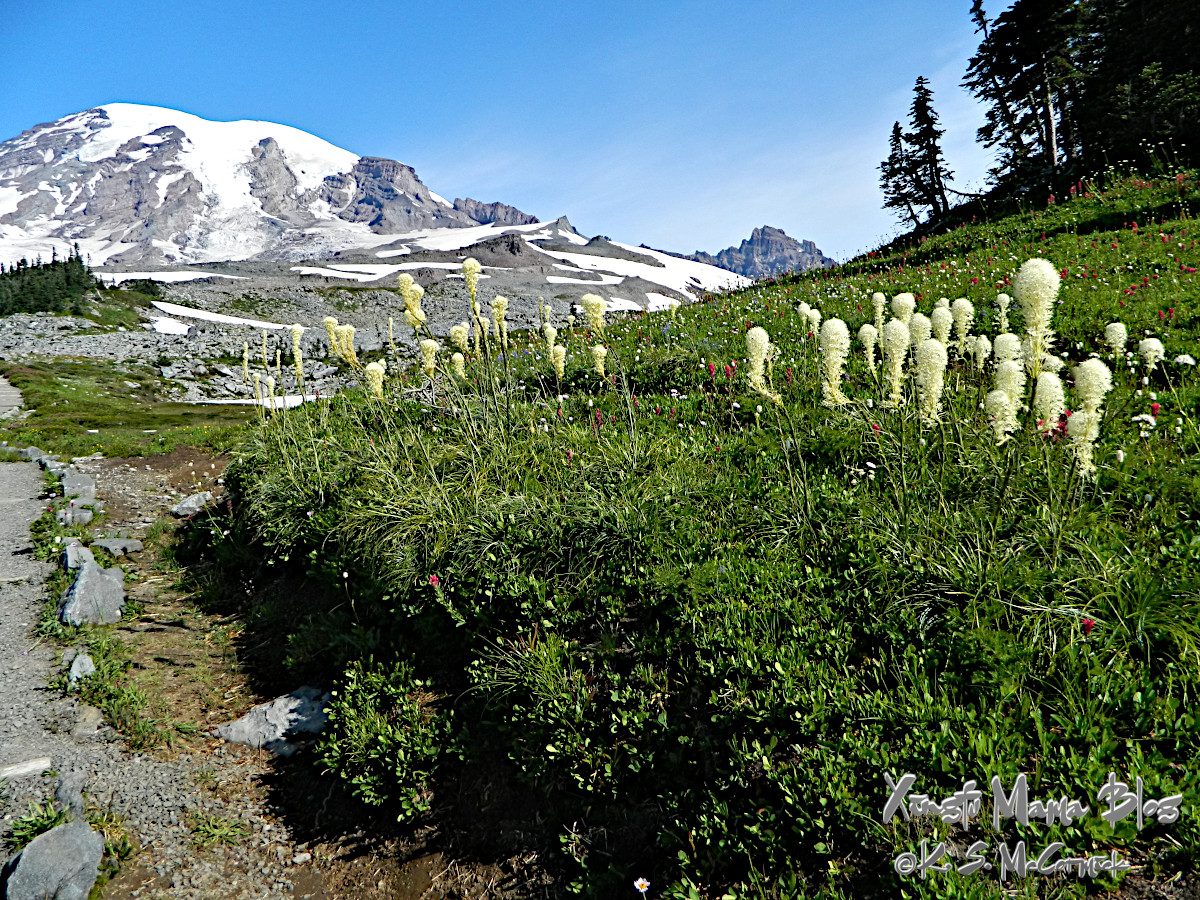 Meadow of bear grass flowers with Mount Rainier in the background.
