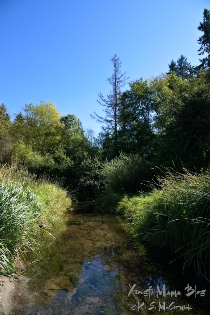 Shinglemill creek at Fern Cove Nature Reserve on Vashon Island.