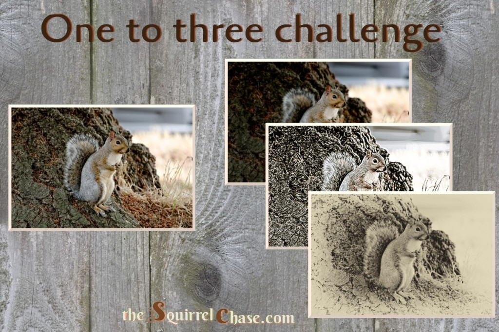 Link to the One-to-Three Photo Processing Challenge.