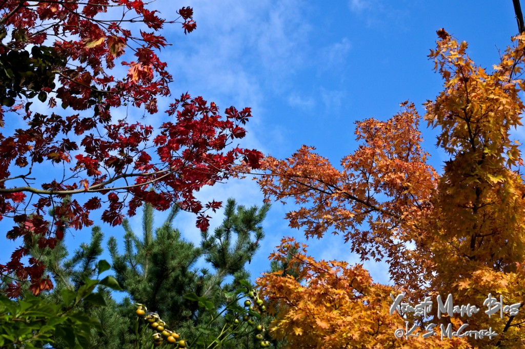 Red and golden autumn maple leaves against a blue sky.
