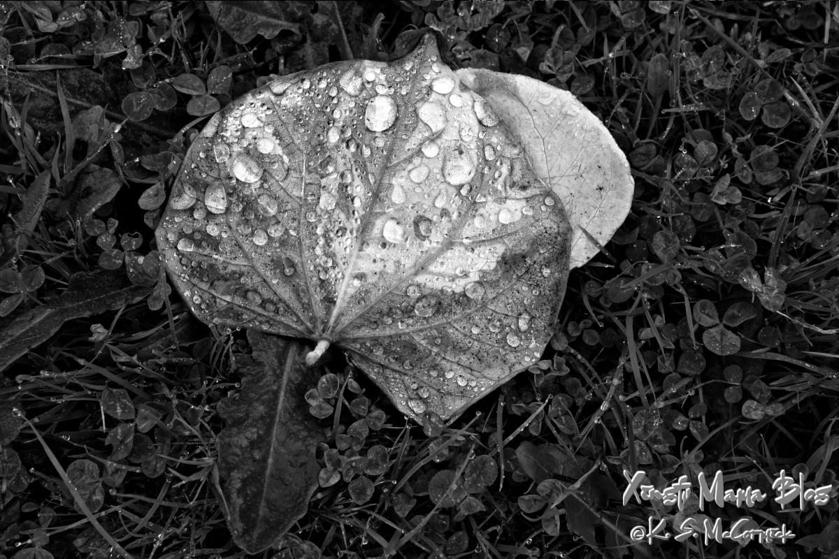 Raindrops on a fallen leaf