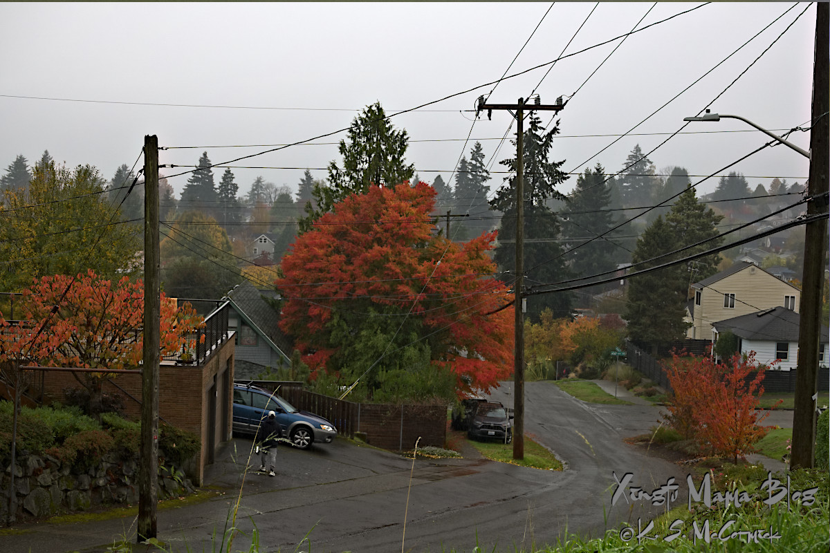 Misty landscape in West Seattle.