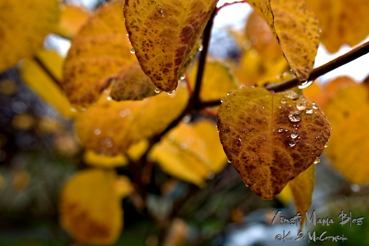 Yellow leaf with silver raindrops.