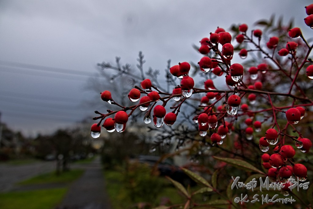 Rainy morning sky and raindrops on Nandina berries.