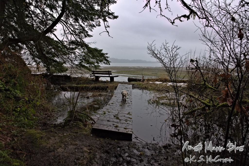 A bench at Fern Cove on Vashon Island, facing out toward the north across Colvos Passage on Puget Sound.