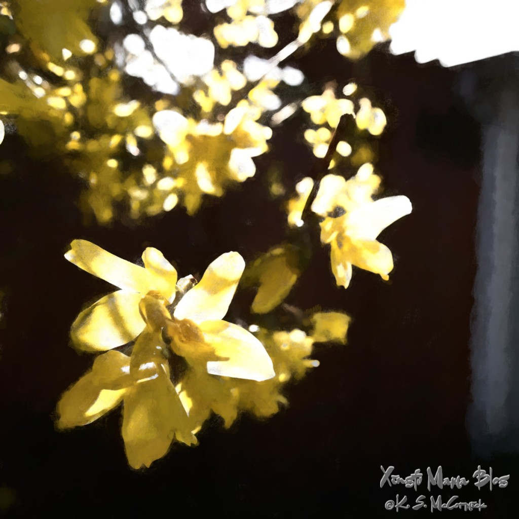 Forsythia flowers with a painterly effect that emphasizes light and shadow applied using Topaz Studio 2.