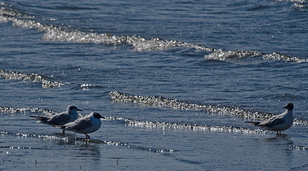 Arctic terns on the shore with sparkling wavelets.