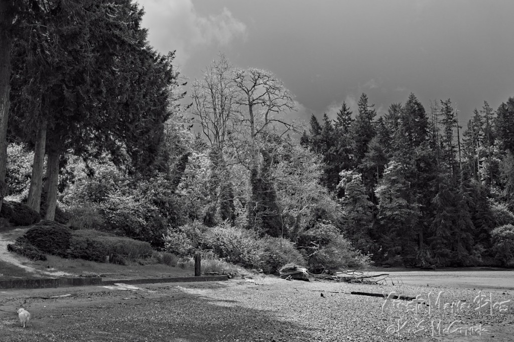 Fern Cove's spring woods converted to black and white.