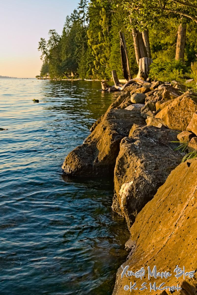 Puget Sound shoreline at high tide...and golden hour.