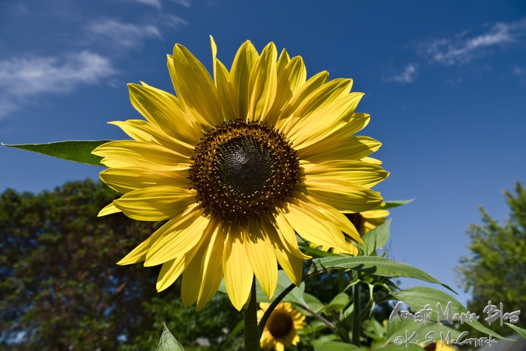 The simple beauty of a yellow sunflower.